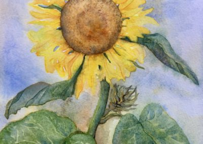Sunflower - Aquarelle - 2018