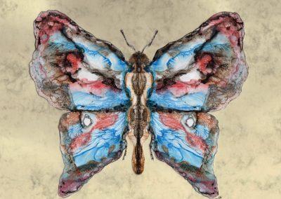 Butterfly - Experimental Acrylic - 2016