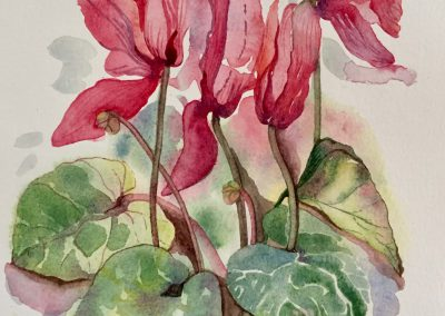 Cyclamen - Aquarelle - 2018